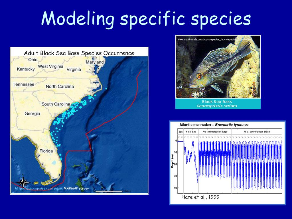 www.martinreefs.com/pages/species_index/species_common.html
