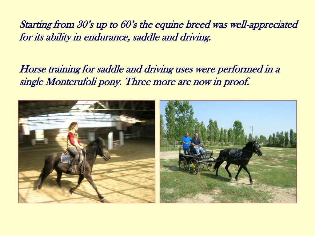Starting from 30's up to 60's the equine breed was well-appreciated for its ability in endurance, saddle and driving.