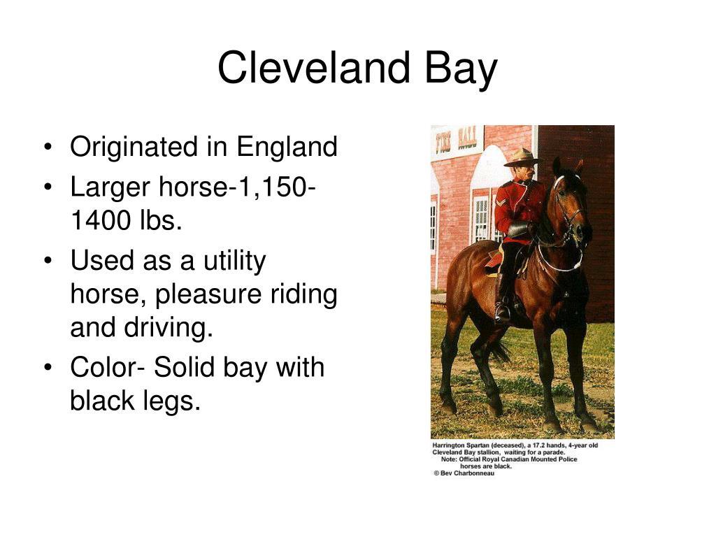 Cleveland Bay