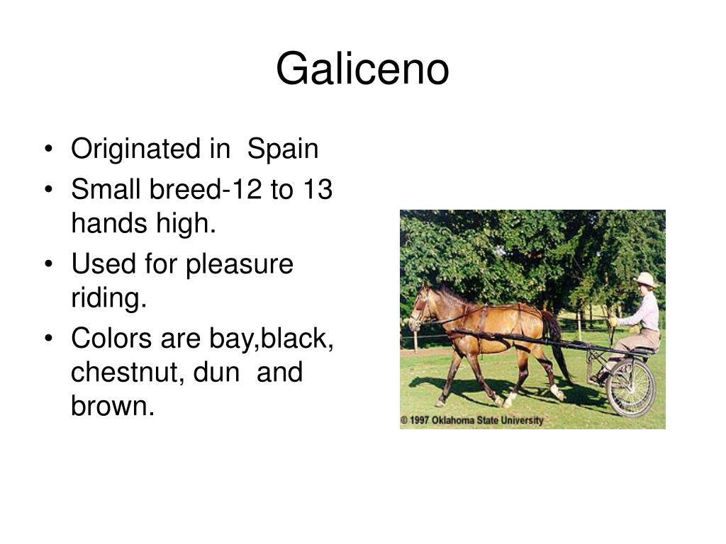 Galiceno