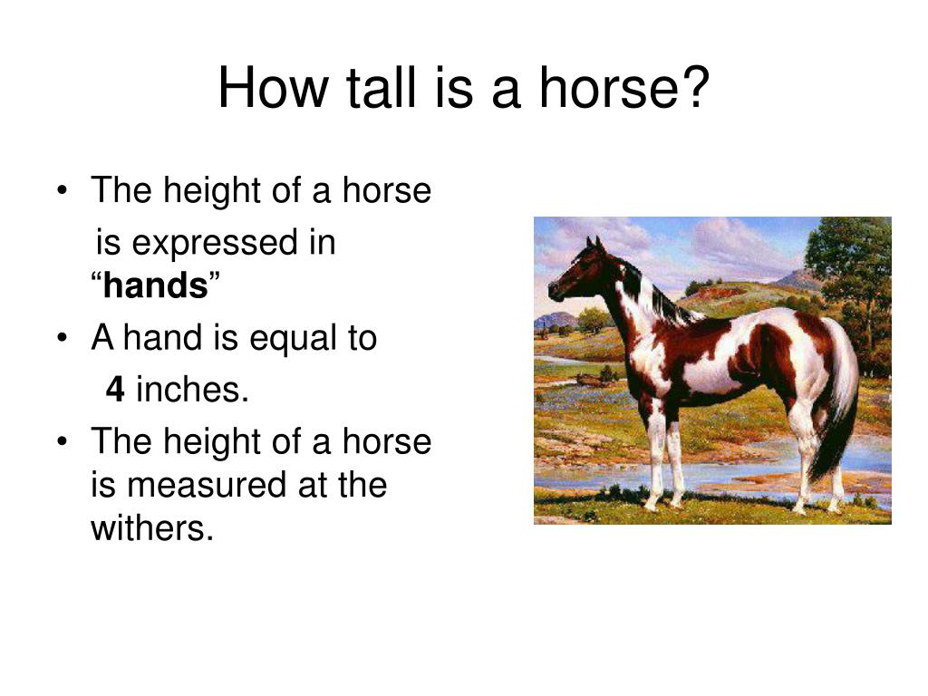 How tall is a horse?