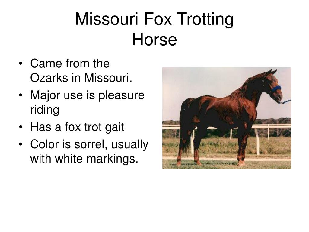 Missouri Fox Trotting