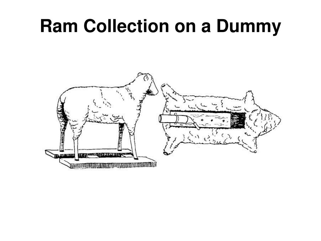 Ram Collection on a Dummy