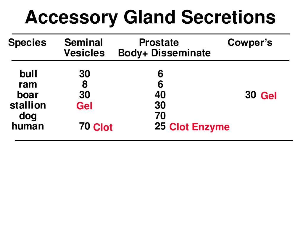 Accessory Gland Secretions