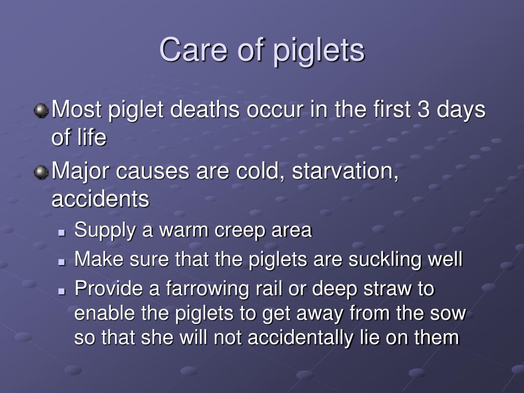 Care of piglets