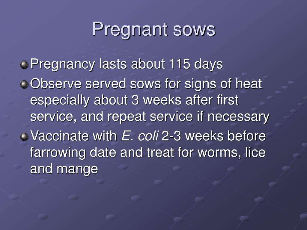 Pregnant sows