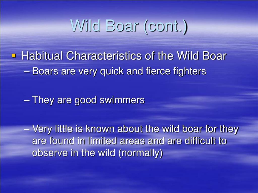 Wild Boar (cont.)