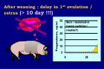 after weaning delay in 1 st ovulation estrus 10 day