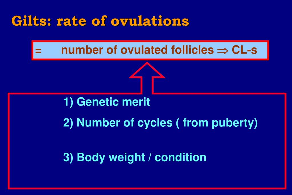 Gilts: rate of ovulations