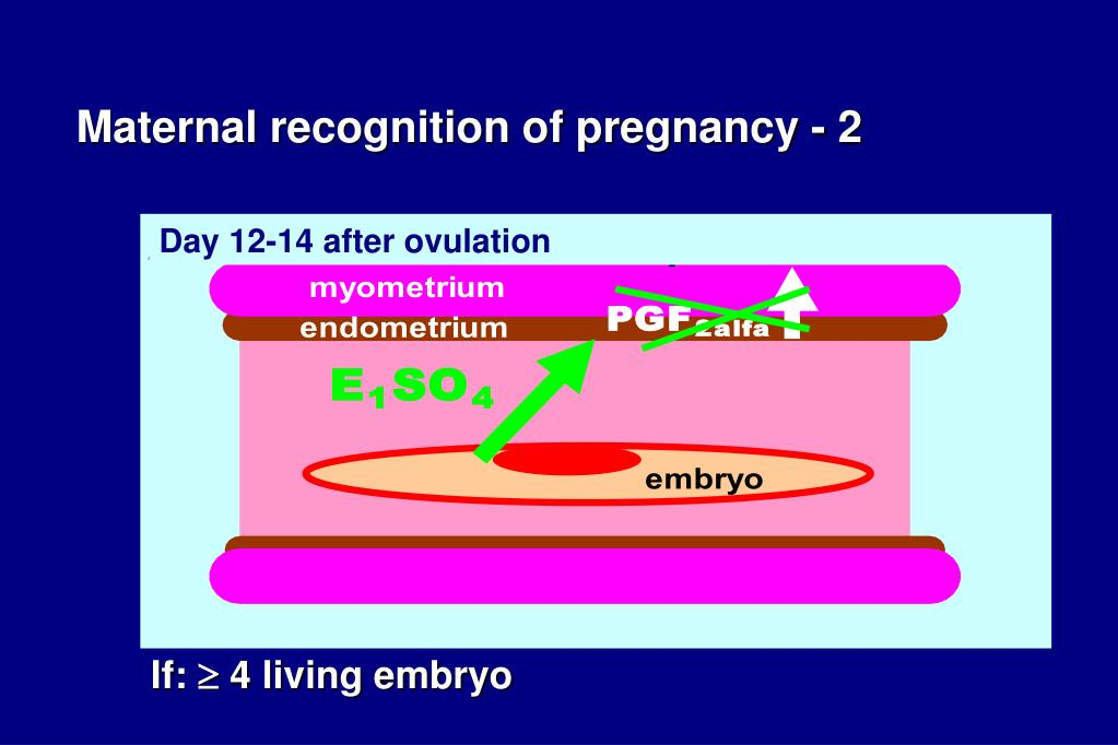 Maternal recognition of pregnancy - 2