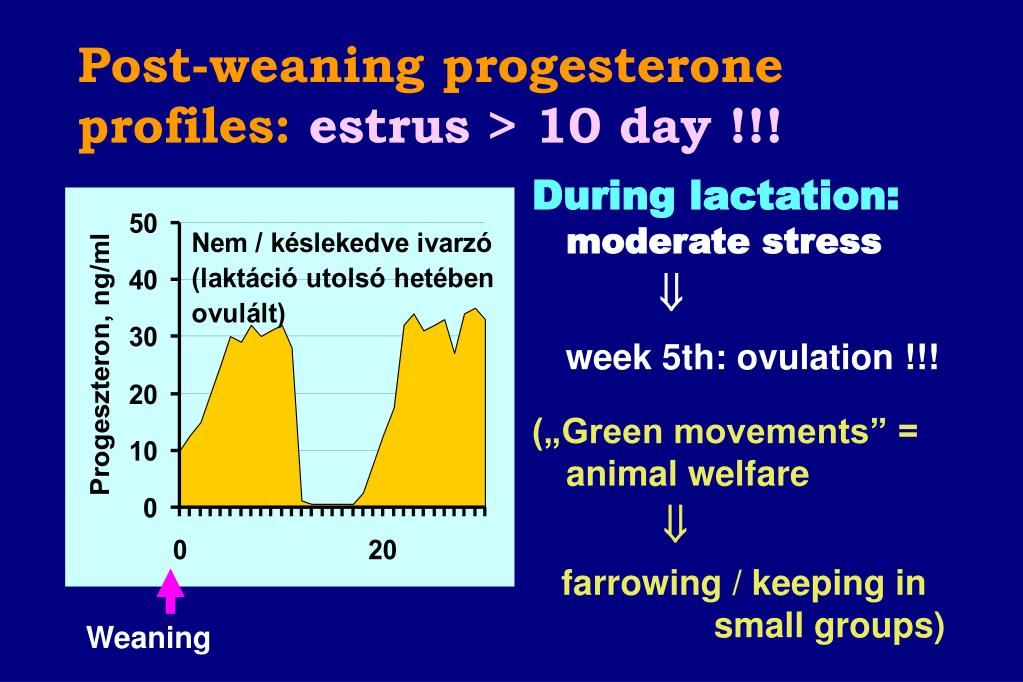 Post-weaning progesterone profiles: