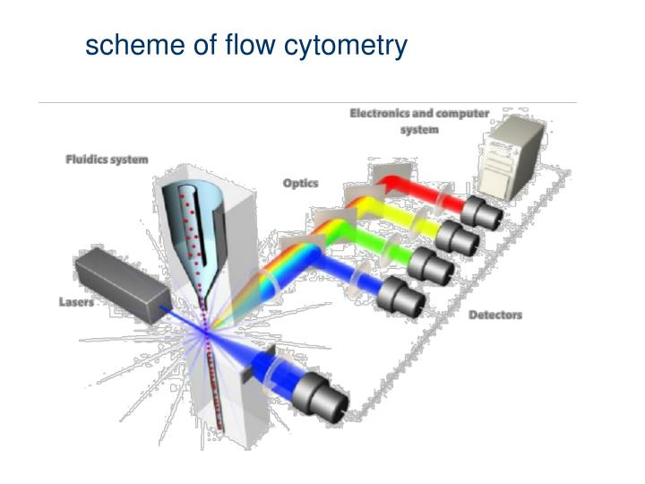 Scheme of flow cytometry