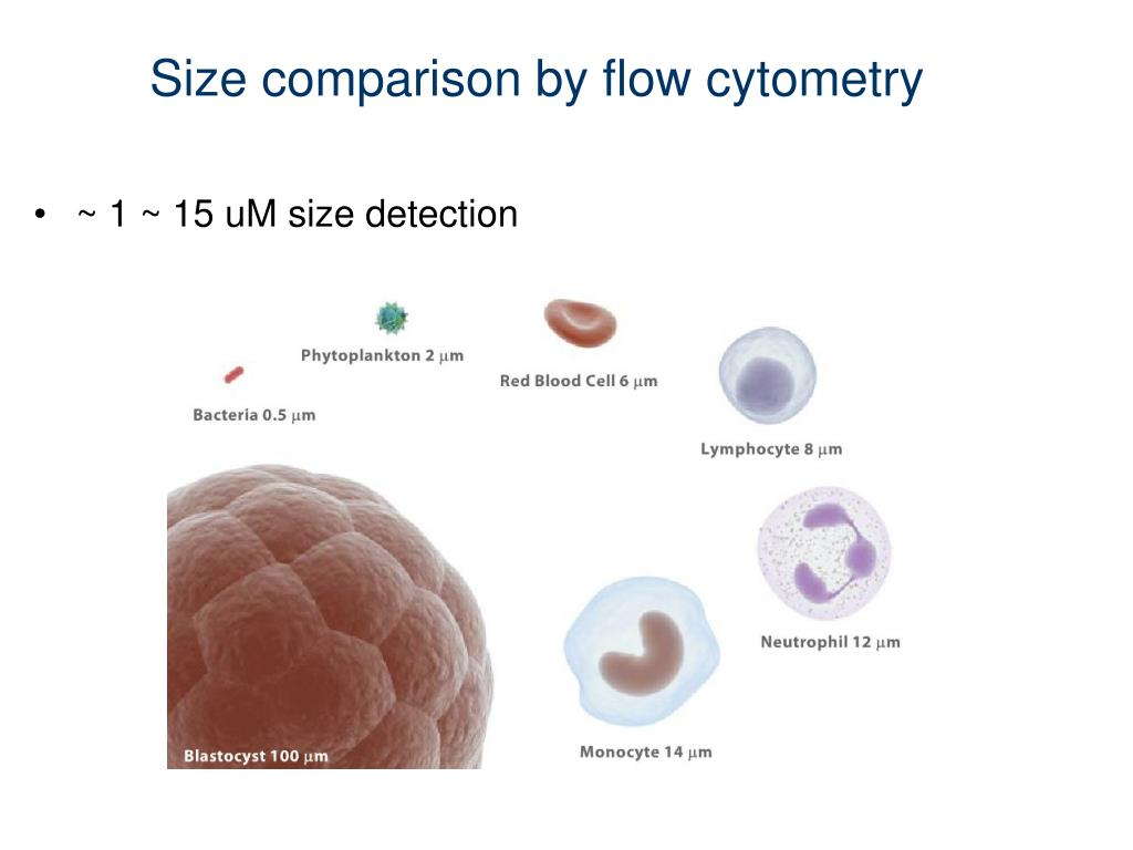 Size comparison by flow cytometry