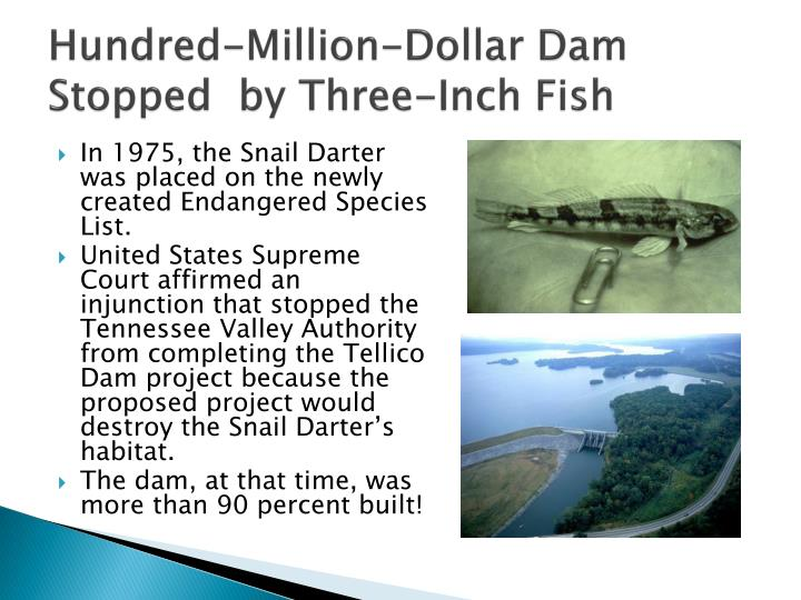 Hundred-Million-Dollar Dam Stopped  by Three-Inch Fish