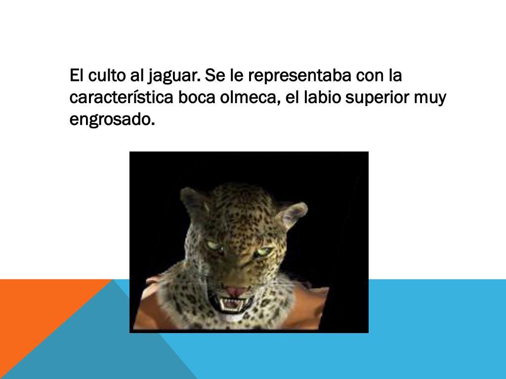 El culto al jaguar. Se le representaba con la característica boca olmeca, el labio superior muy engrosado.