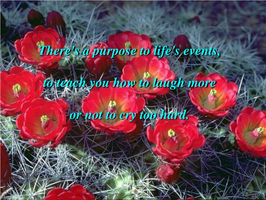There's a purpose to life's events,