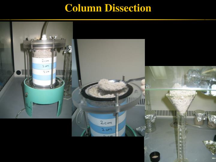 Column Dissection