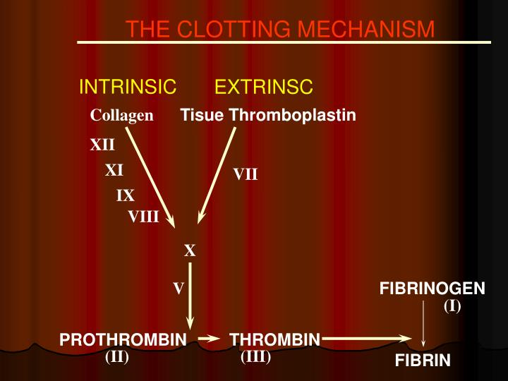 THE CLOTTING MECHANISM