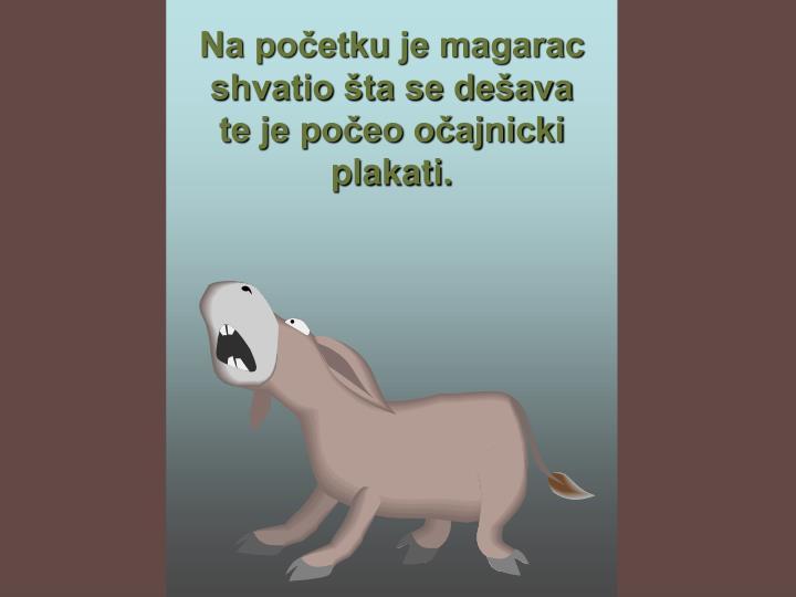 Na početku je magarac shvatio šta se dešava te je počeo očajnicki plakati.