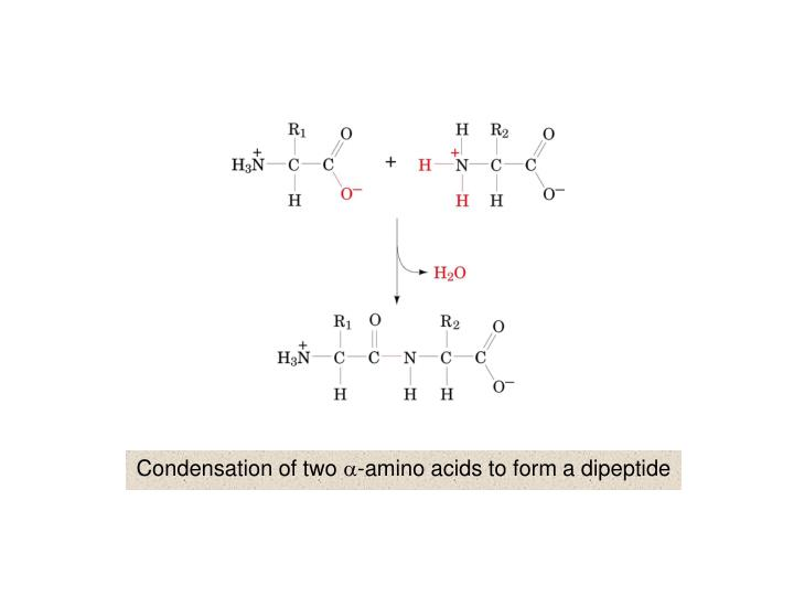 Condensation of two