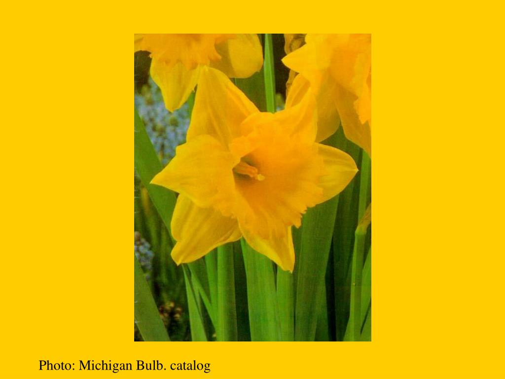 Photo: Michigan Bulb. catalog