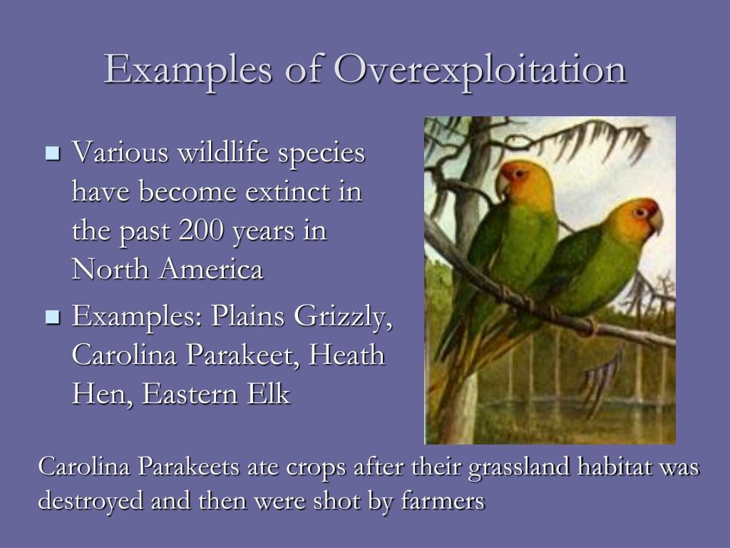 Examples of Overexploitation
