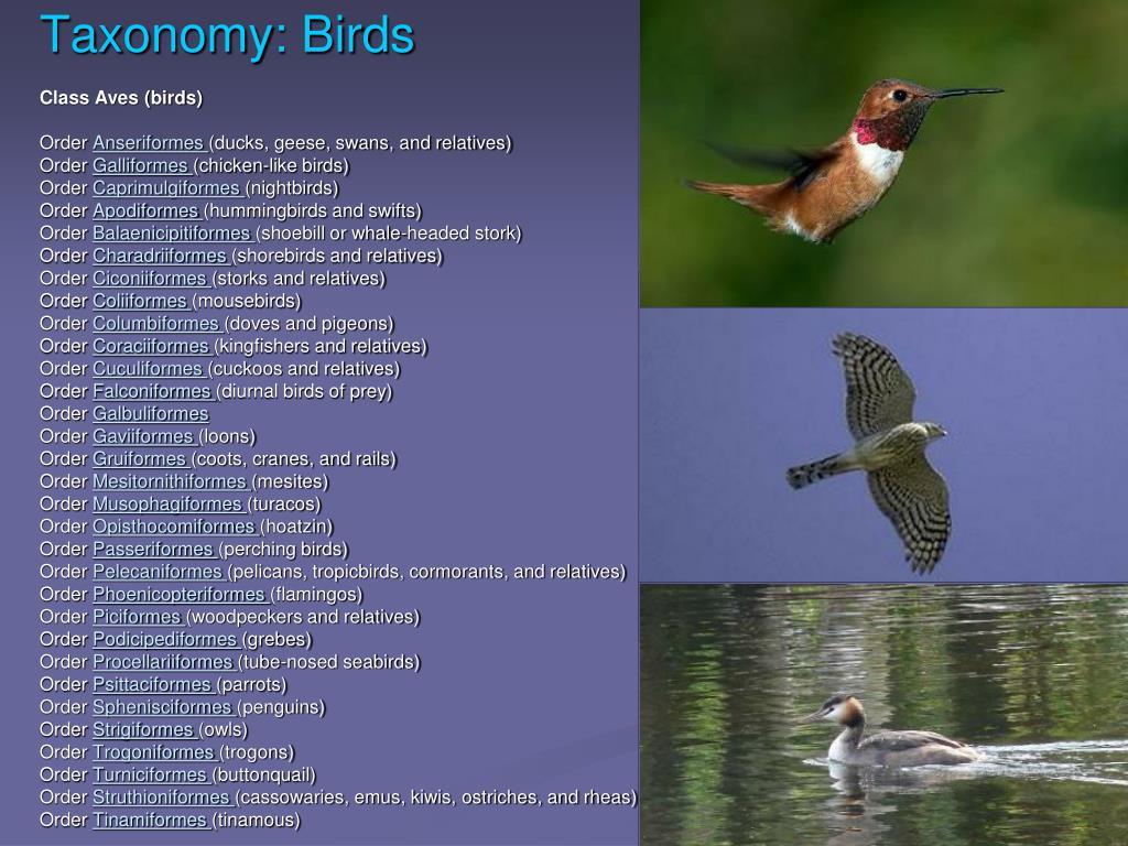 Taxonomy: Birds