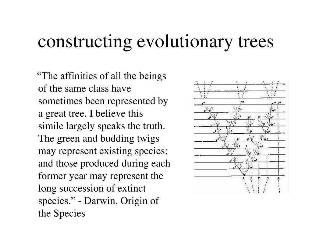 constructing evolutionary trees