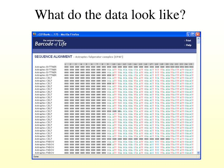 What do the data look like?