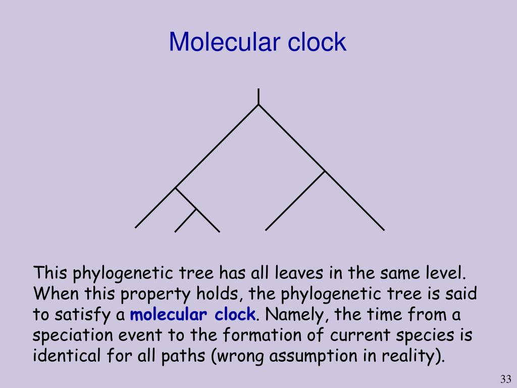 Molecular clock