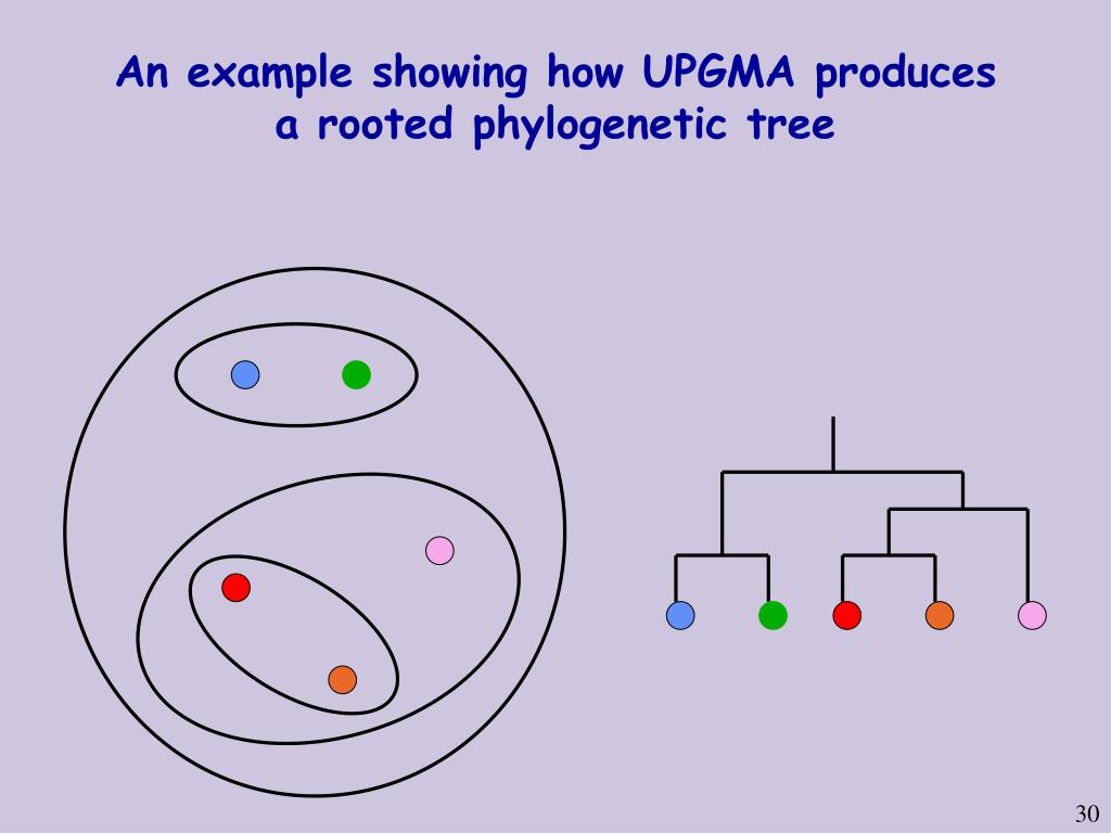 An example showing how UPGMA produces