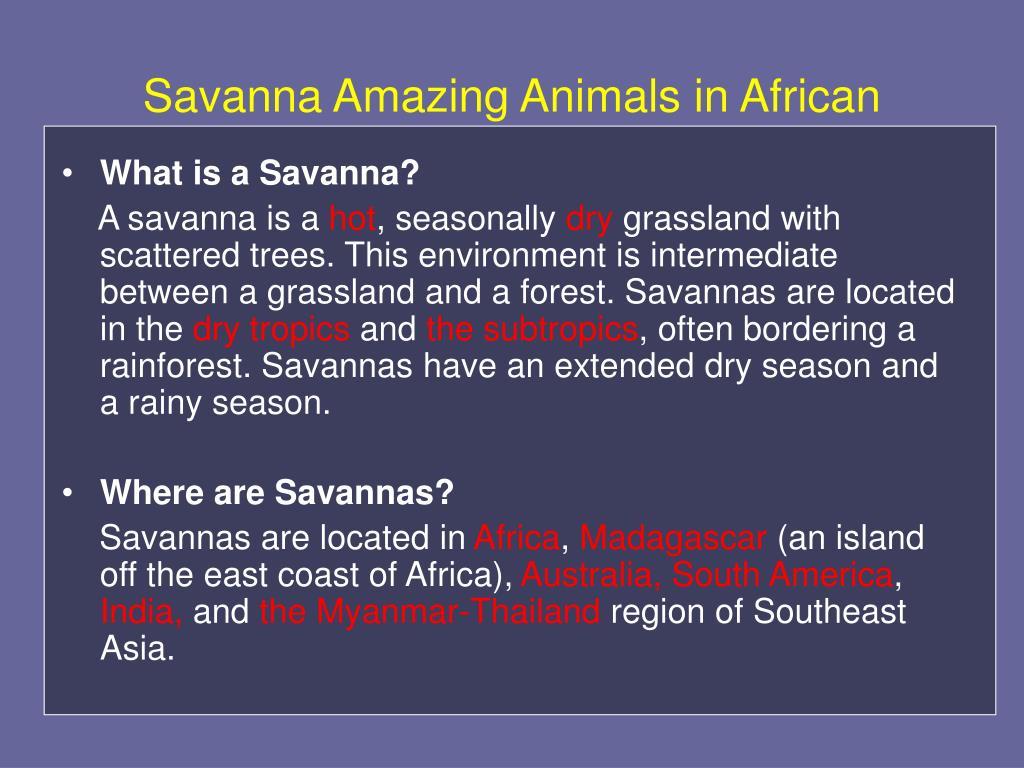 Savanna Amazing Animals in African