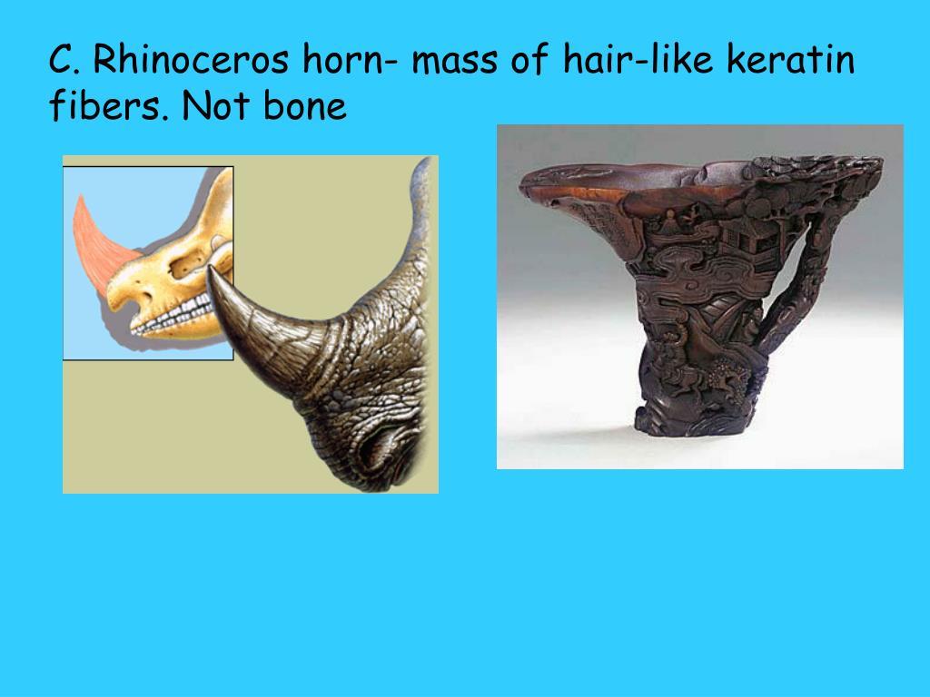 C. Rhinoceros horn- mass of hair-like keratin fibers. Not bone