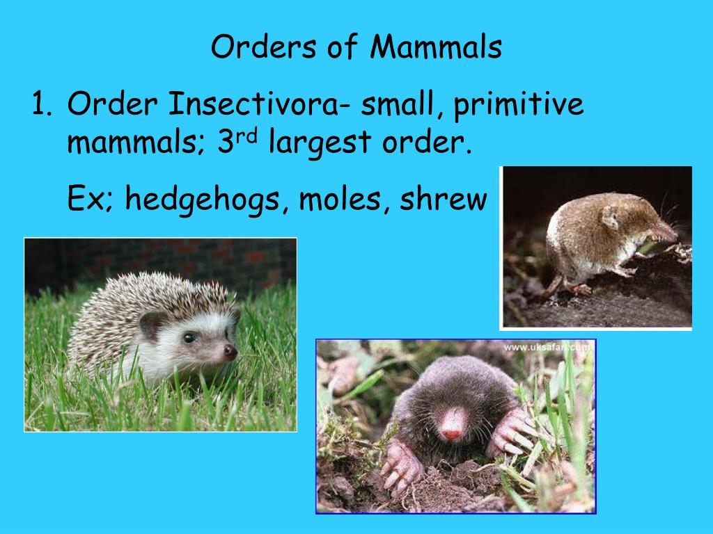 Orders of Mammals