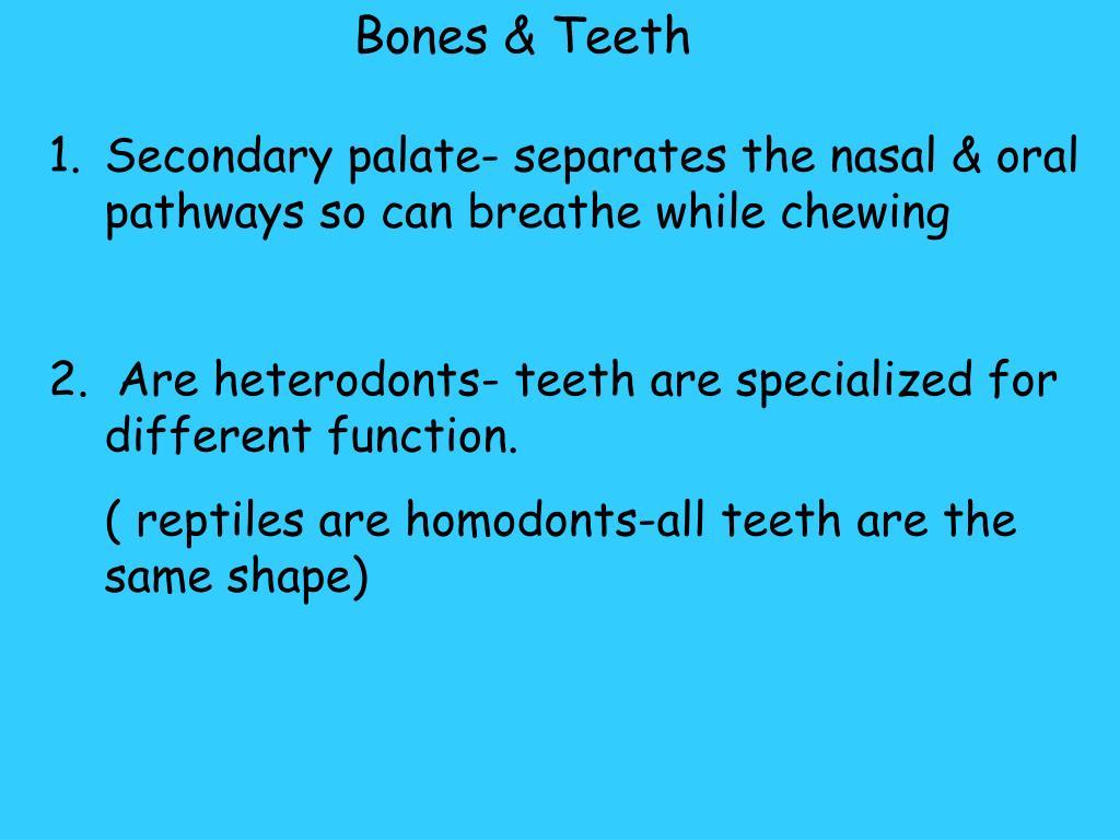 Bones & Teeth