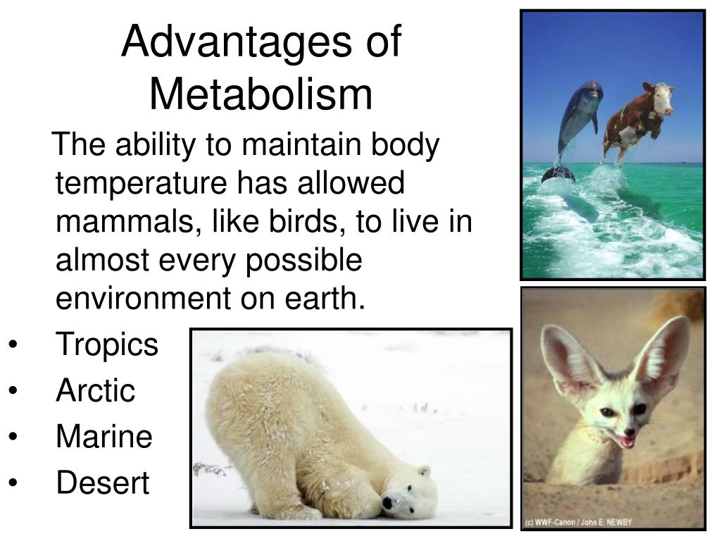 Advantages of Metabolism