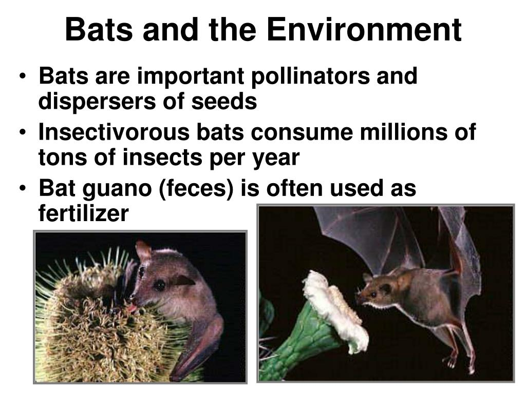 Bats and the Environment