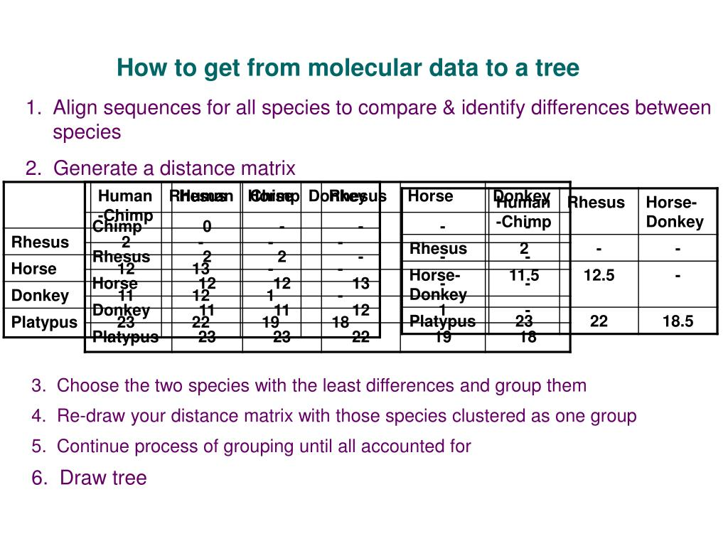 How to get from molecular data to a tree