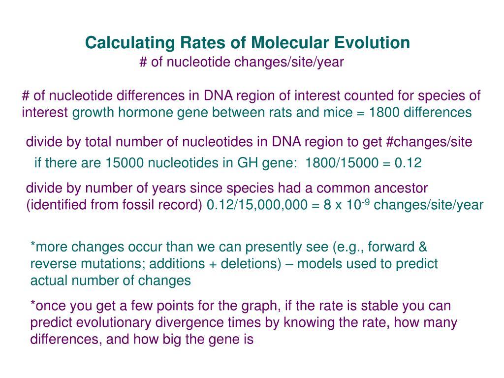 Calculating Rates of Molecular Evolution
