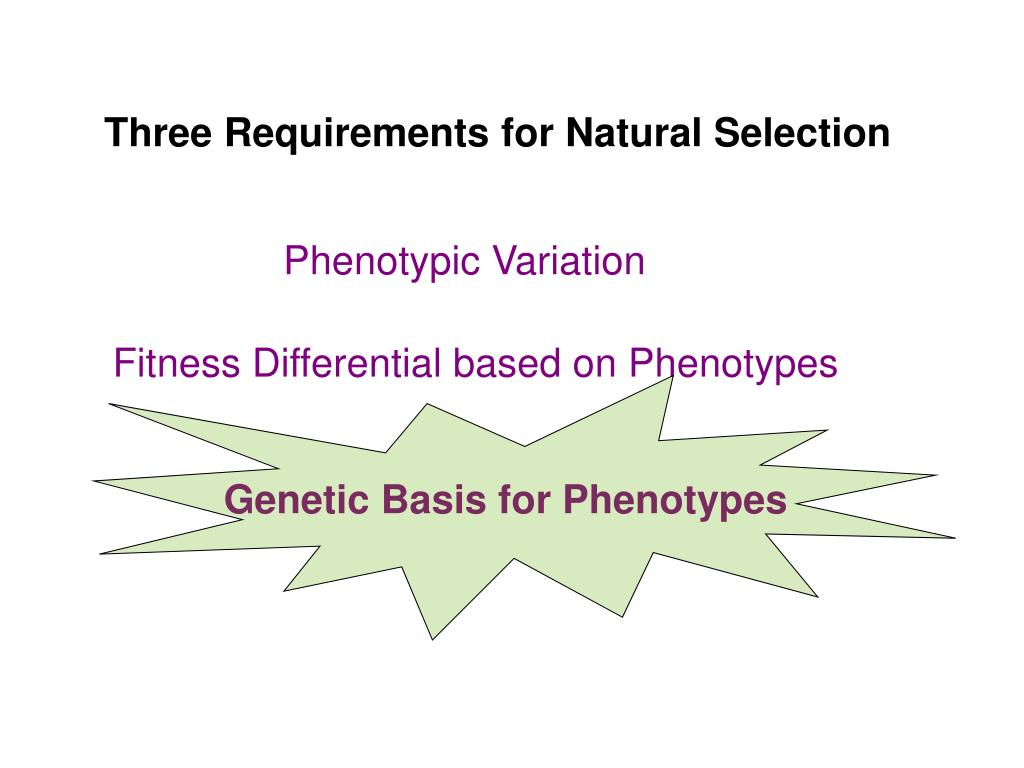 Genetic Basis for Phenotypes