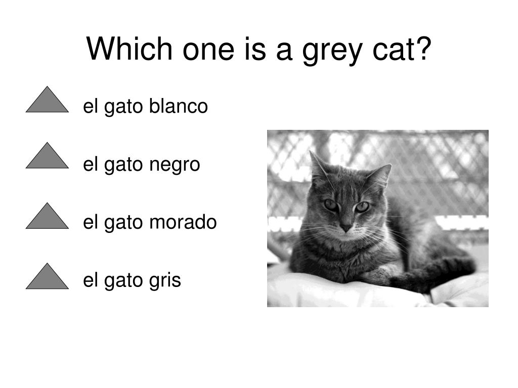 Which one is a grey cat?