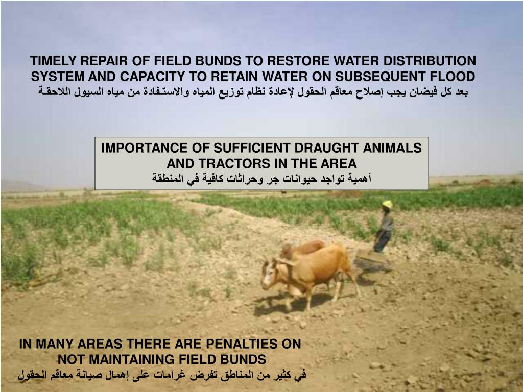 TIMELY REPAIR OF FIELD BUNDS TO RESTORE WATER DISTRIBUTION SYSTEM AND CAPACITY TO RETAIN WATER