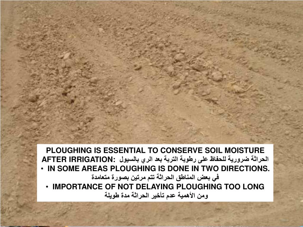 PLOUGHING IS ESSENTIAL TO CONSERVE SOIL MOISTURE