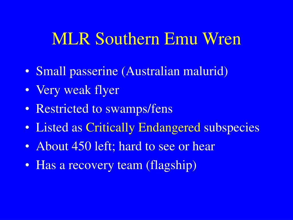 MLR Southern Emu Wren