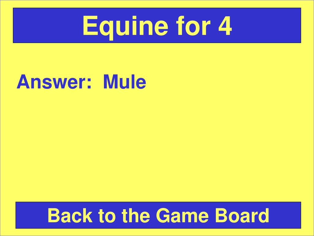 Equine for 4