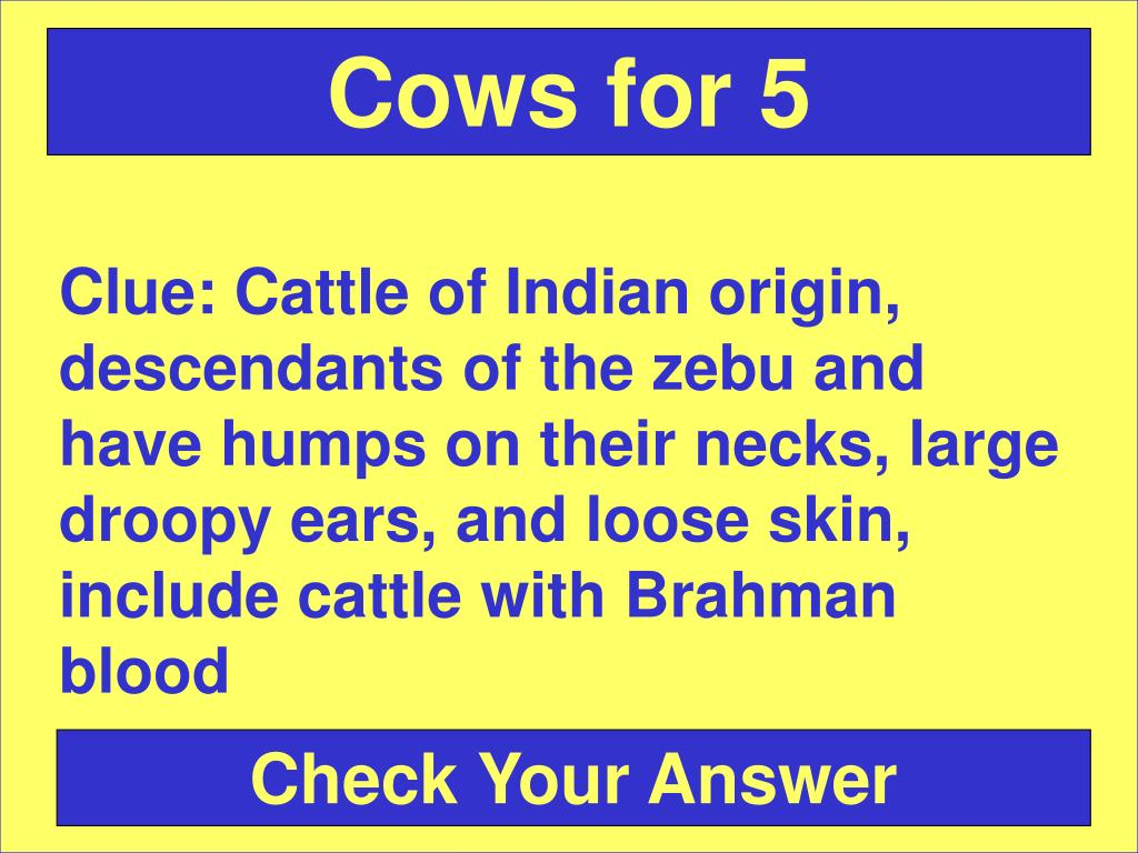 Cows for 5