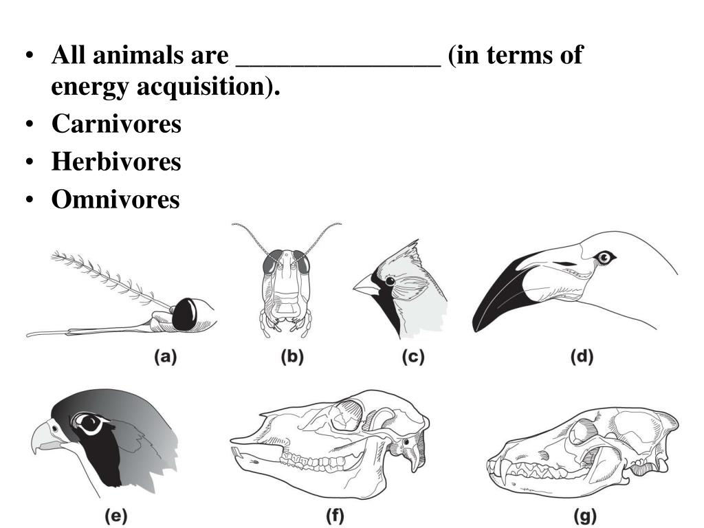 All animals are _______________ (in terms of energy acquisition).