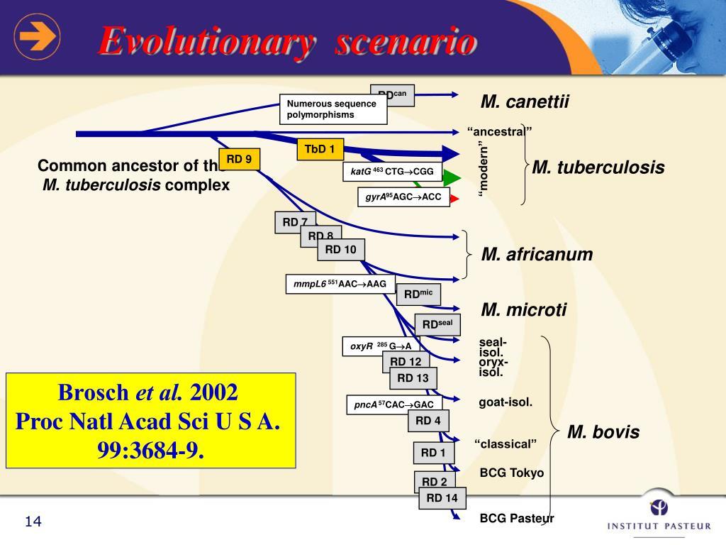 Evolutionary  scenario