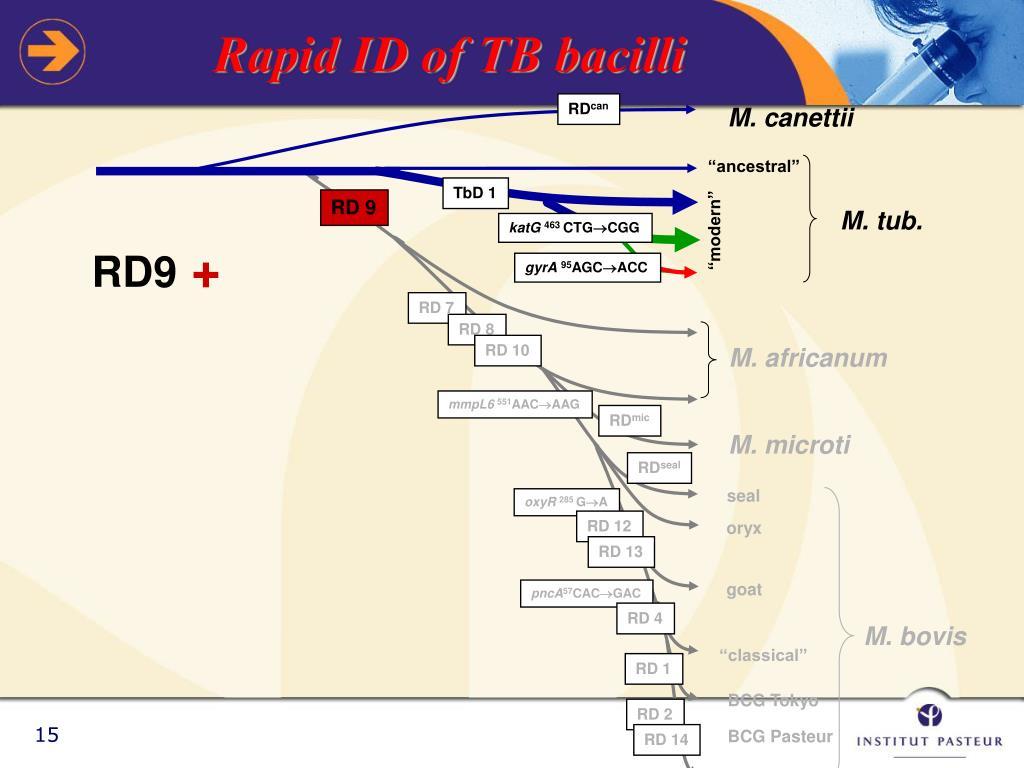 Rapid ID of TB bacilli