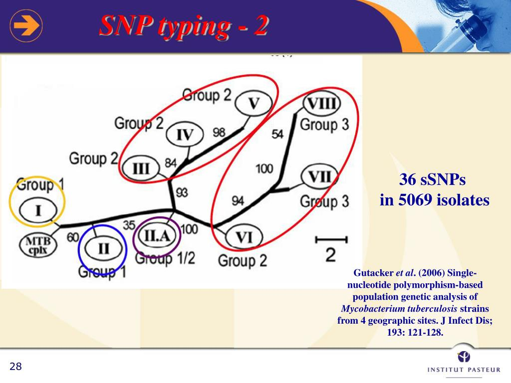 SNP typing - 2